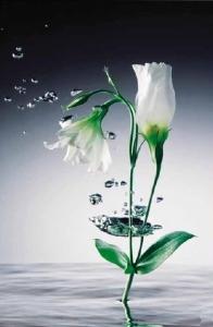 Fototapeta Ledový květ