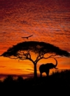 Fototapety National Geographic Západ Slunce v Africe