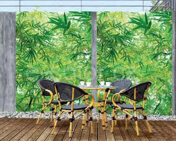 Fototapety na zeď, Bambus, zelená