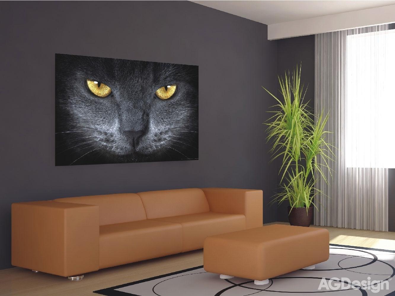 Fototapeta Černá kočka