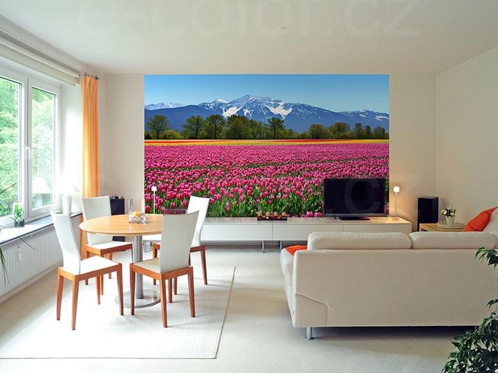 Fototapety Pole s tulipány