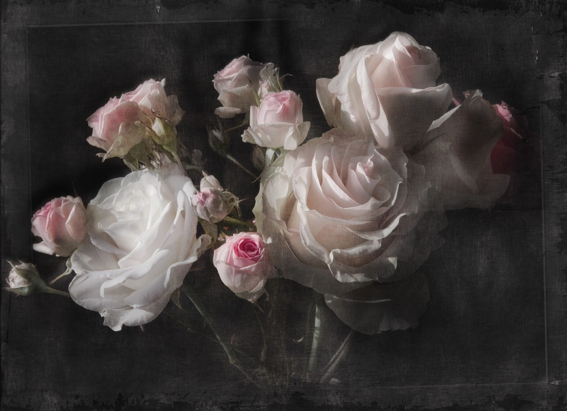 Fototapeta růže Eternity