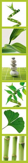 Samolepící fototapety Ginko zelená
