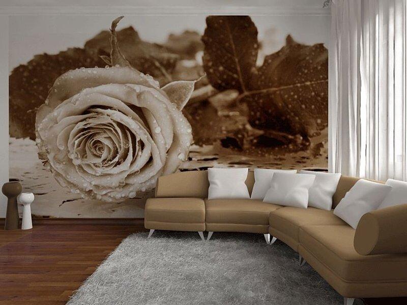 Fototapeta na stěnu Růže