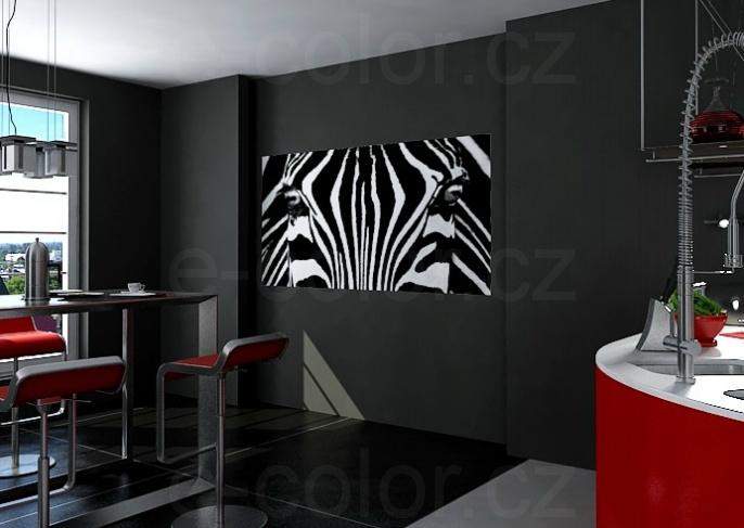 Fototapety Zebra