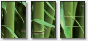 Samolepící fototapety Bambusový les