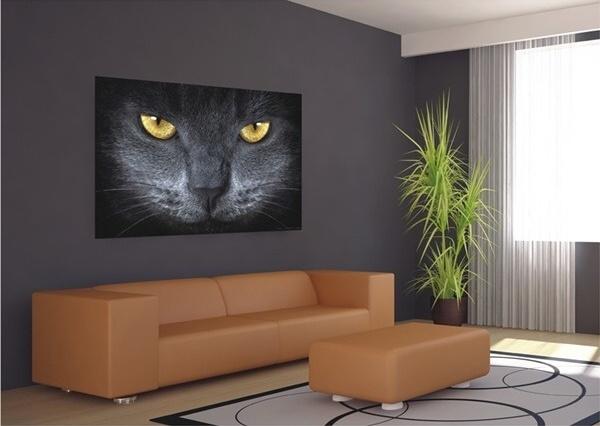 Fototapety Šedá kočka