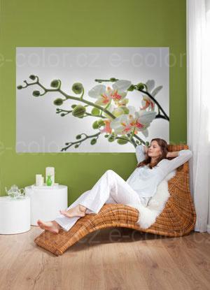 Fototapeta na zeď Orchidej