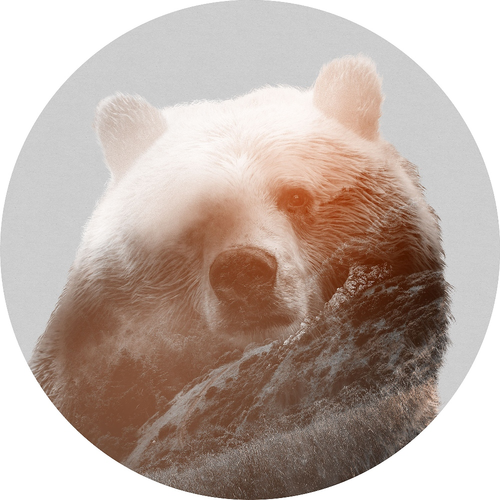 Samolepící fototapeta kruh - Mother Nature - Medvěd