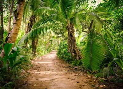 Fototapeta Vlies Livingwalls Procházka mezi palmami