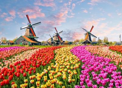 Fototapeta Vlies Livingwalls Holandsko ZaanseSchans, Tulipány