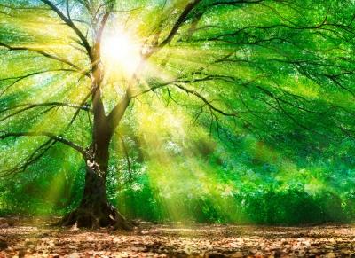 Fototapeta Vlies Livingwalls Lesní paprsky slunce