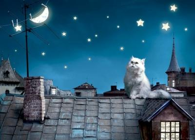 Fototapeta Kočka a noční život