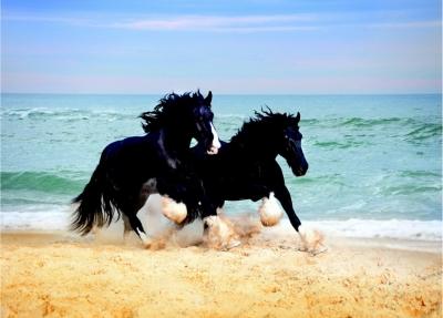 Fototapeta koně a moře