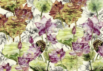 Fototapeta vlies květy Lotusu