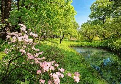 Fototapety Rozkvetlý park na jaře