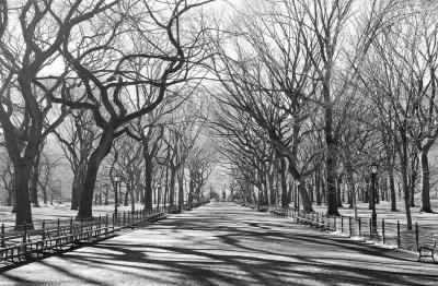 Fototapety Romantická procházka