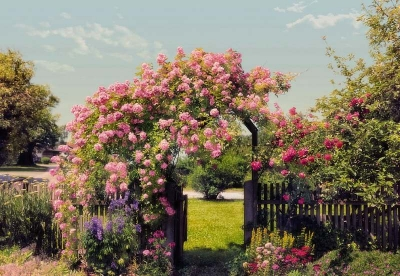 Fototapeta na zeď Branka z růží