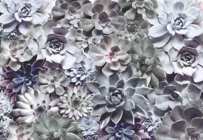 Fototapety Sukulenty s odstíny šedé