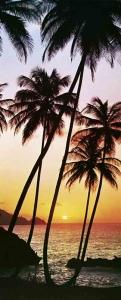 Fototapety Západ slunce na pláži