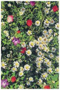 Vlněný koberec Kaleidoskop louka