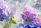 Fototapeta Květiny Otaksa