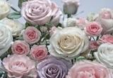 Fototapety na zeď Kytice Růží