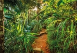 Fototapeta Cesta v pralese