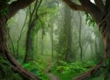 Fototapeta Vlies Livingwalls Tropický prales