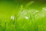 Fototapety Zelená tráva