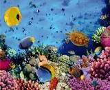 Fototapeta podmořský život