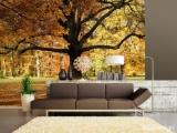 Fototapeta Vlies Podzimní strom