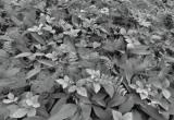 Fototapety Lesní květiny