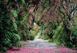 Fototapety Národní park Wicklow
