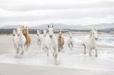 Fototapeta Bílí koně
