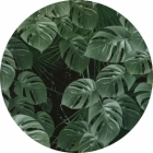 Samolepící fototapeta kruh - Mother Nature - Monstera
