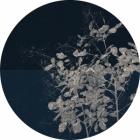 Samolepící fototapeta kruh - History of Arts - Větev