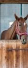 Fólie na renovaci dveří Kůň ve stáji