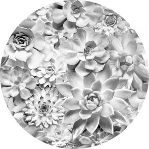 Samolepící fototapeta kruh - Mother Nature - Echeveria