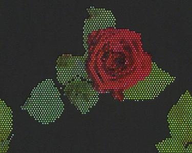Tapety na zeď Lars Contzen růže černá
